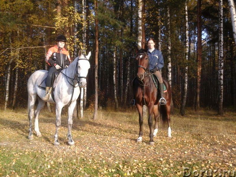 Верховая езда, прокат лошадей Щелково,Королев - Прочее по отдыху и спорту - Для желающих покататься..., фото 1