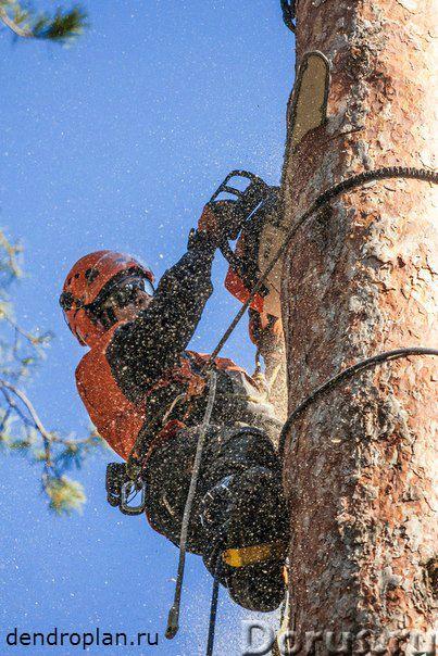 Удаление и кронирование деревьев вЩелково - Строительные услуги - Проводим профессиональное удалени..., фото 1