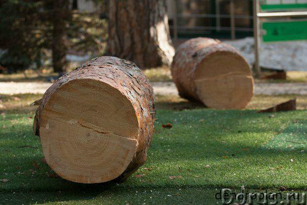 Удаление и кронирование деревьев вЩелково - Строительные услуги - Проводим профессиональное удалени..., фото 2