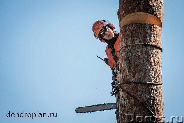 Удаление и кронирование деревьев вЩелково - Строительные услуги - Проводим профессиональное удалени..., фото 3